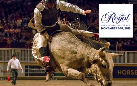 Royal Rodeo
